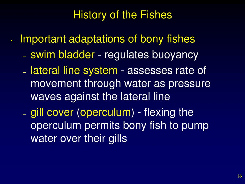 History of the Fishes