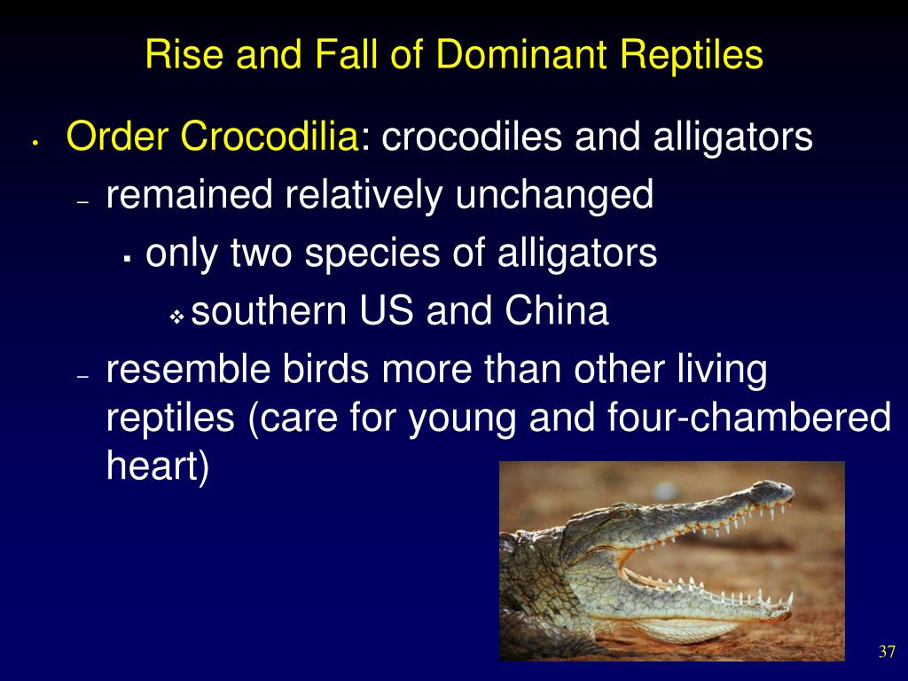 Rise and Fall of Dominant Reptiles