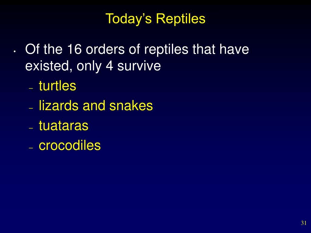 Today's Reptiles