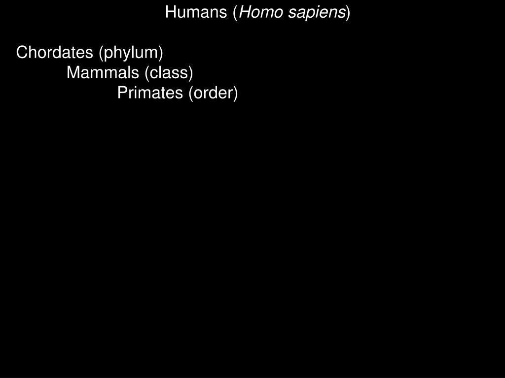 Humans (
