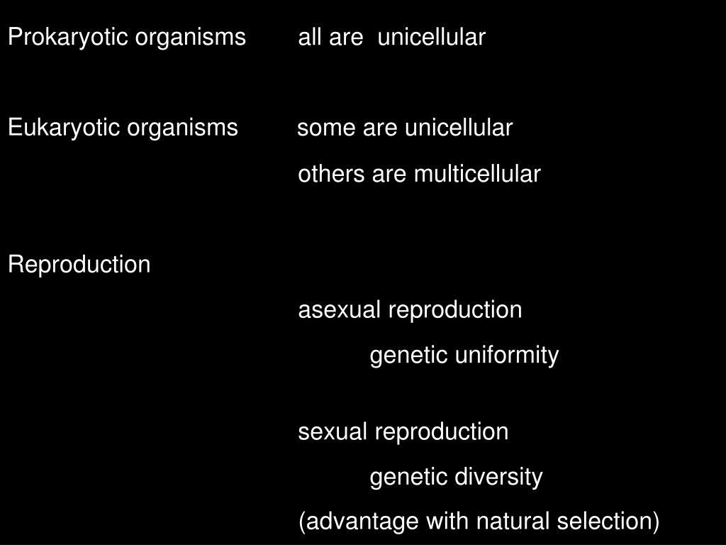 Prokaryotic organisms