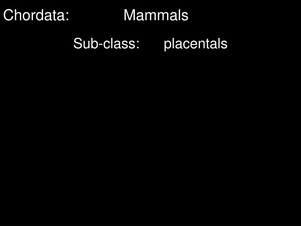Chordata:Mammals