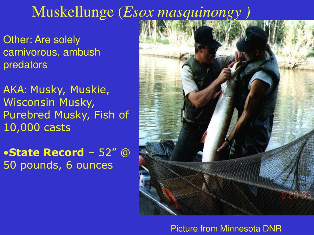 Muskellunge (