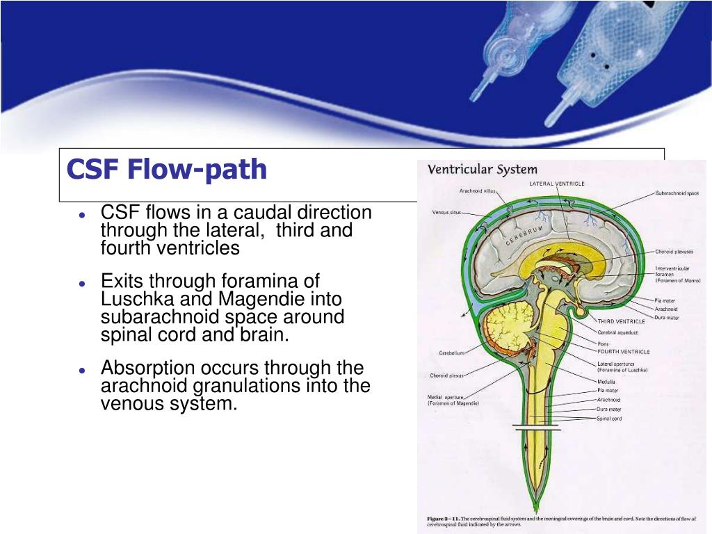CSF Flow-path