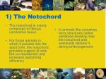 1 the notochord