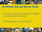 4 hollow dorsal nerve cord