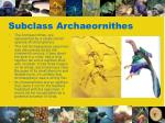 subclass archaeornithes