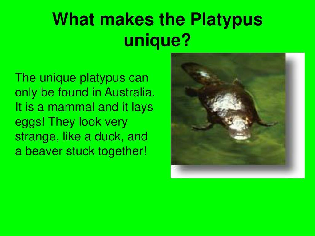 What makes the Platypus unique?