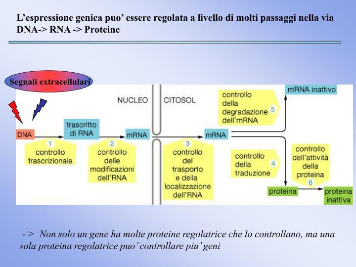 Segnali extracellulari