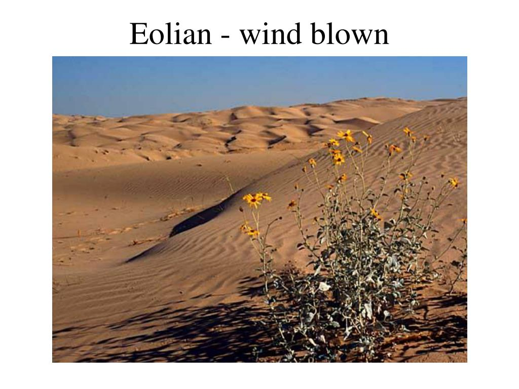 Eolian - wind blown