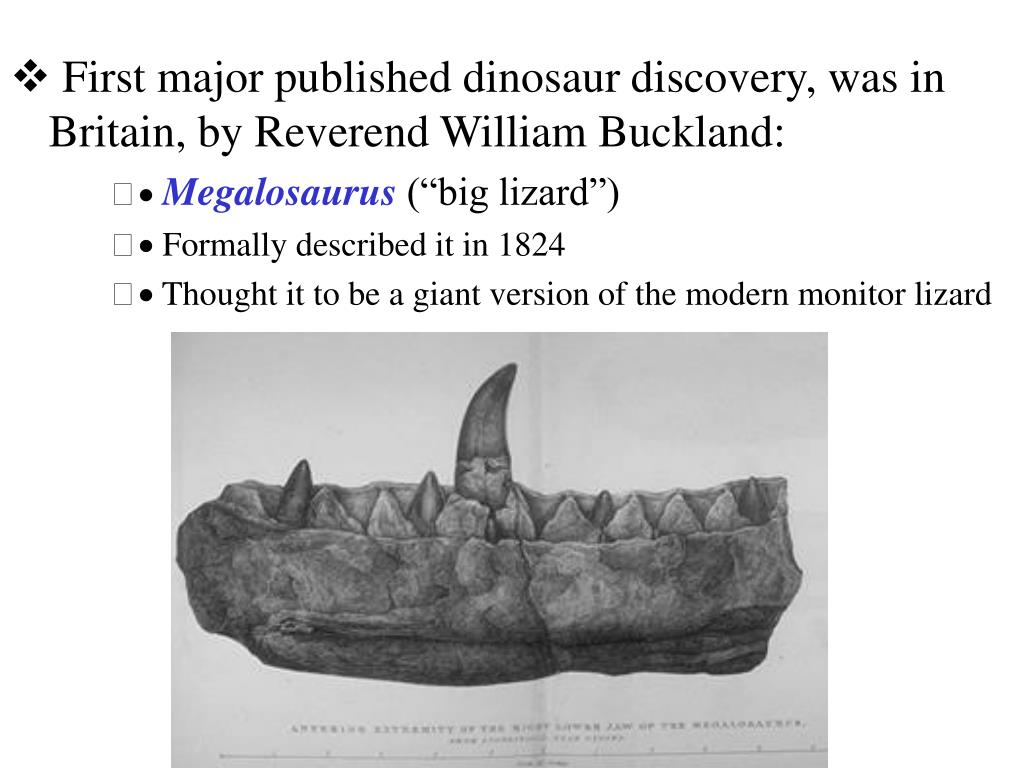First major published dinosaur discovery, was in Britain, by Reverend William Buckland: