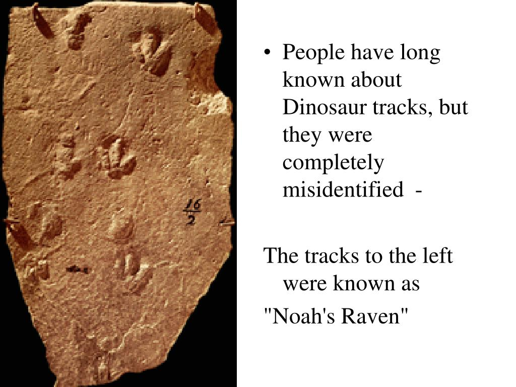 People have long known about Dinosaur tracks, but they were completely misidentified  -