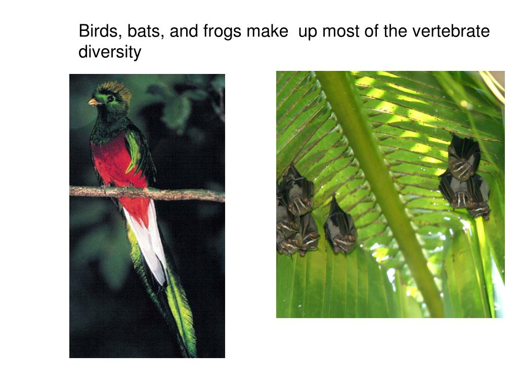 Birds, bats, and frogs make  up most of the vertebrate diversity