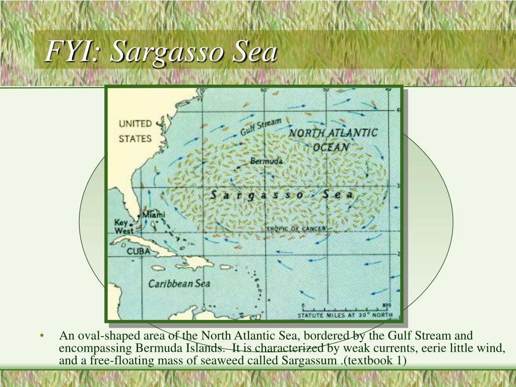 FYI: Sargasso Sea