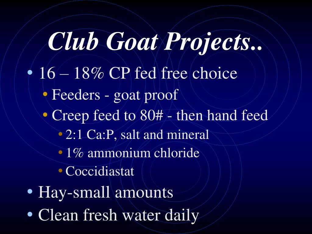 Club Goat Projects..