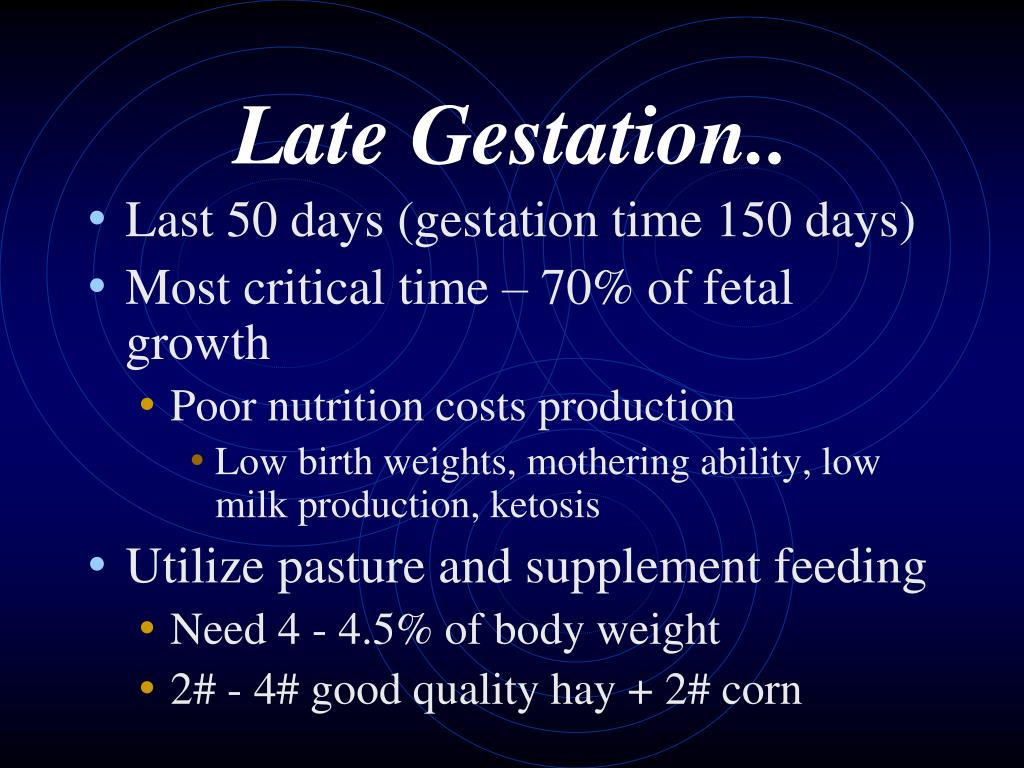 Late Gestation..