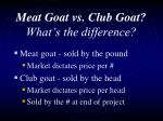 meat goat vs club goat what s the difference