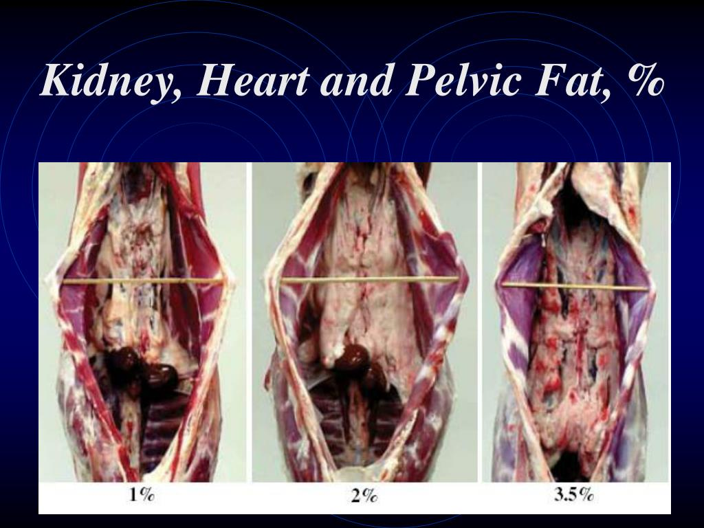 Kidney, Heart and Pelvic Fat, %