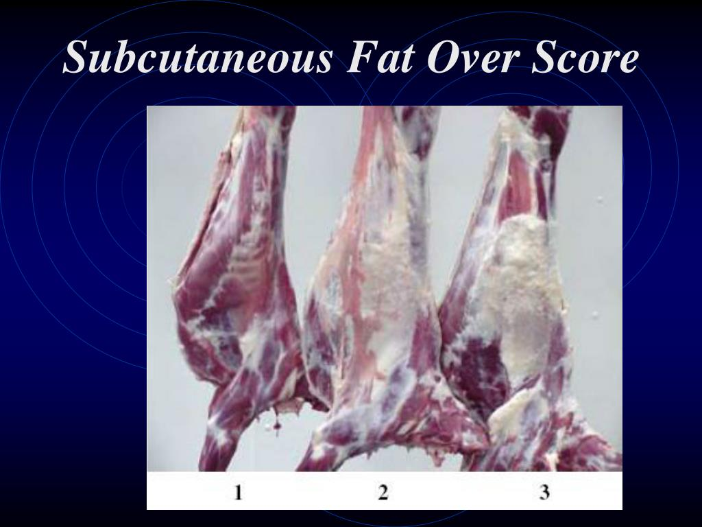 Subcutaneous Fat Over Score