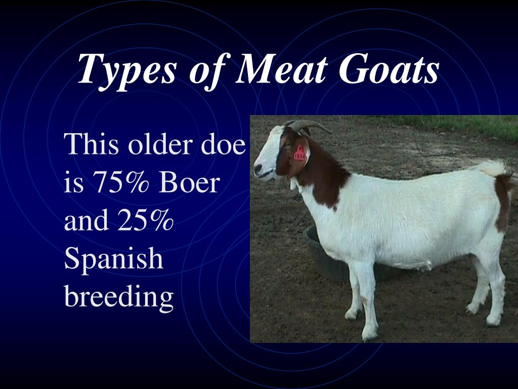 Types of Meat Goats