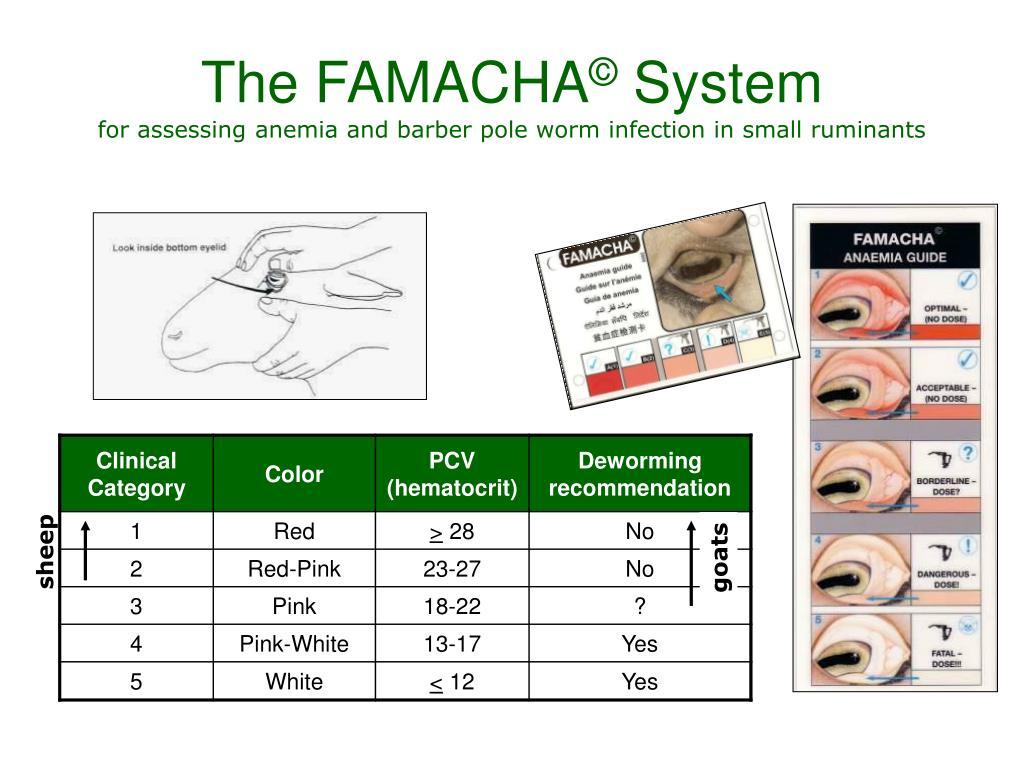 The FAMACHA