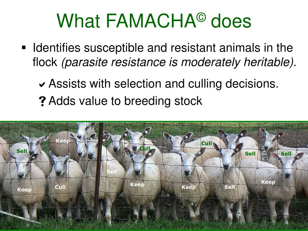Identifies susceptible and resistant animals in the flock