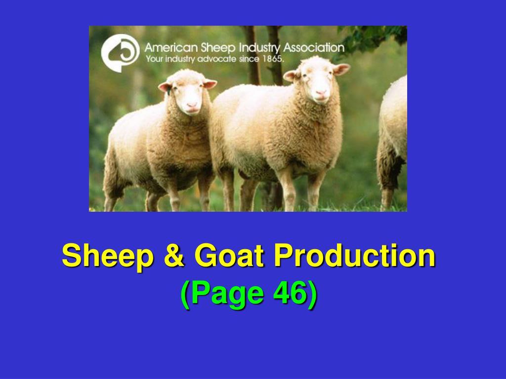 Sheep & Goat Production
