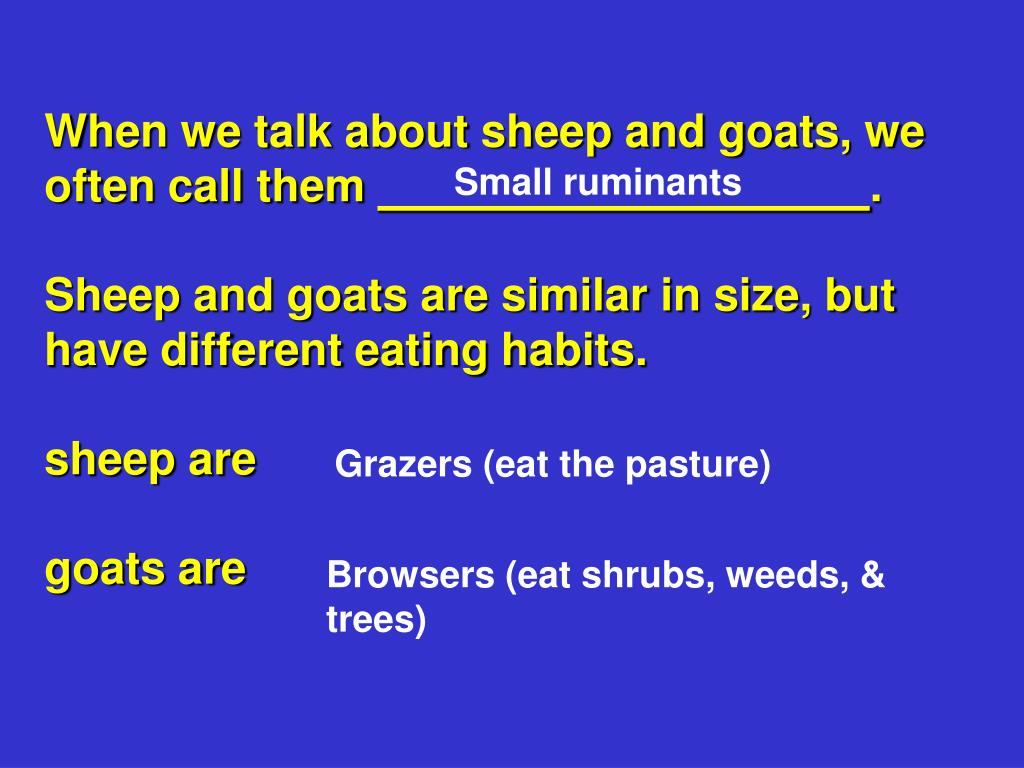 When we talk about sheep and goats, we often call them