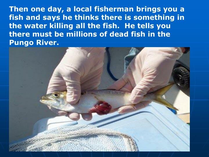 Then one day, a local fisherman brings you a fish and says he thinks there is something in the water killing all the fish.  He tells you there must be millions of dead fish in the Pungo River.