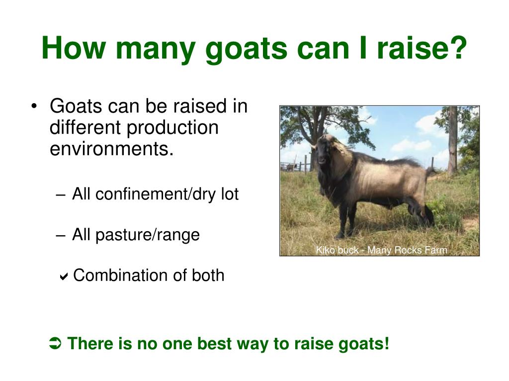 Goats can be raised in different production environments.