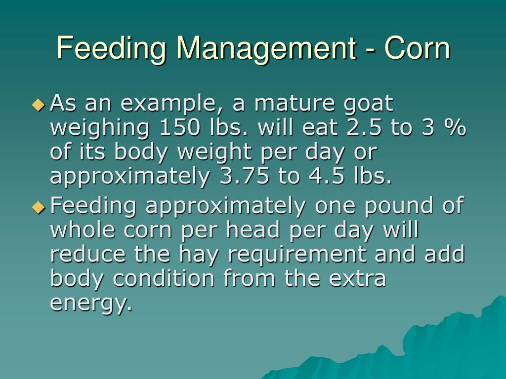 Feeding Management - Corn