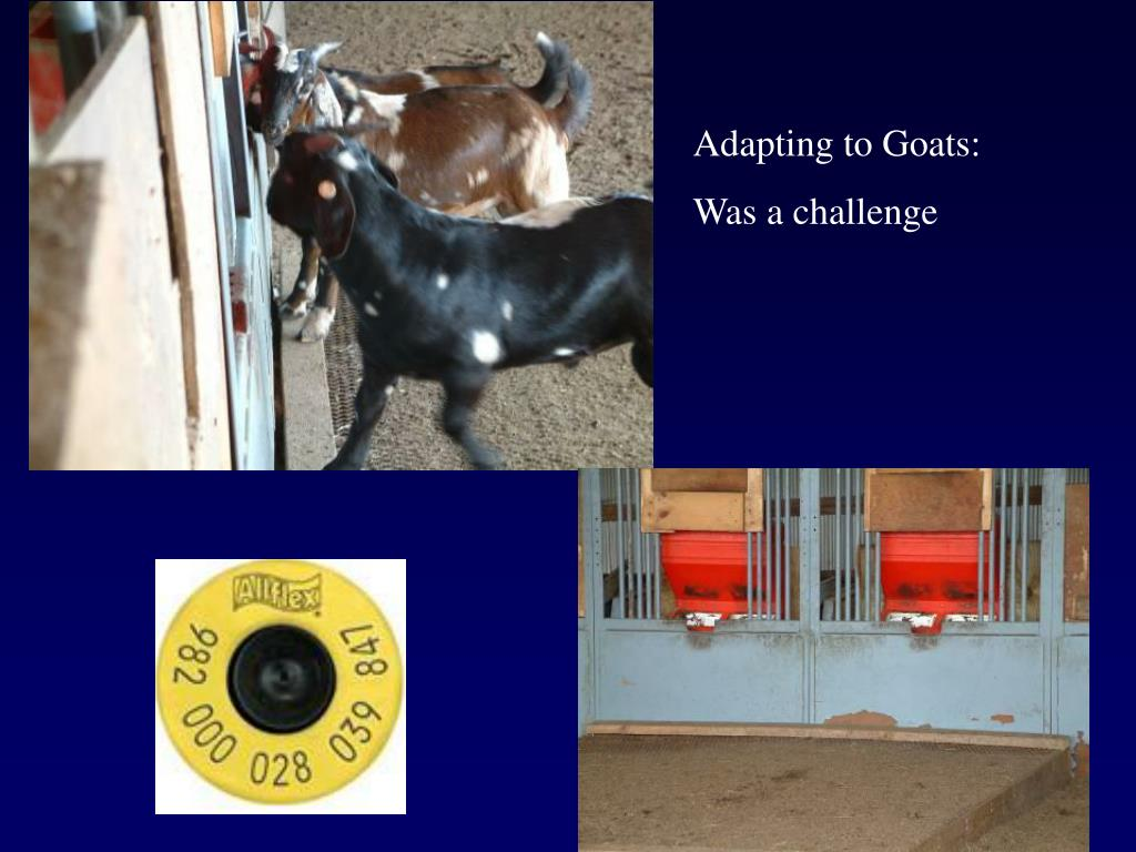 Adapting to Goats: