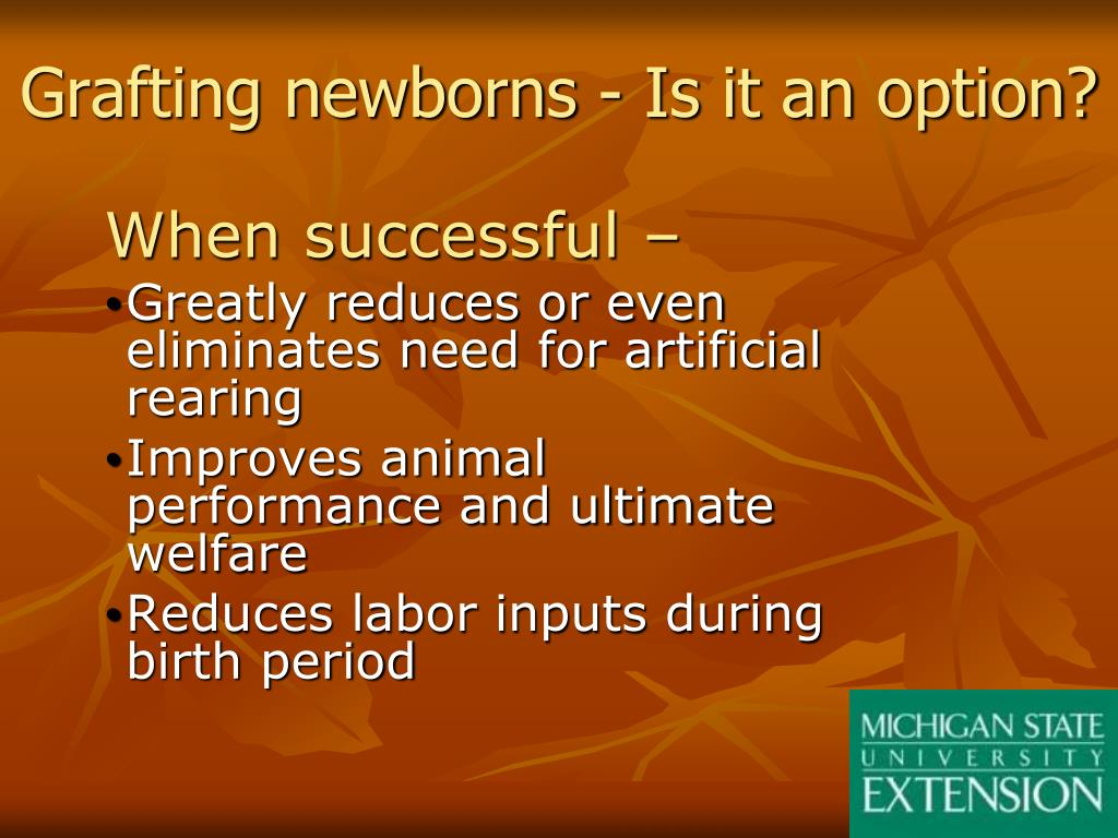 Grafting newborns - Is it an option?