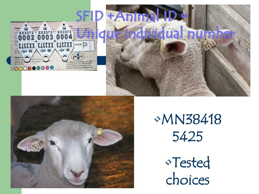 SFID +Animal ID =