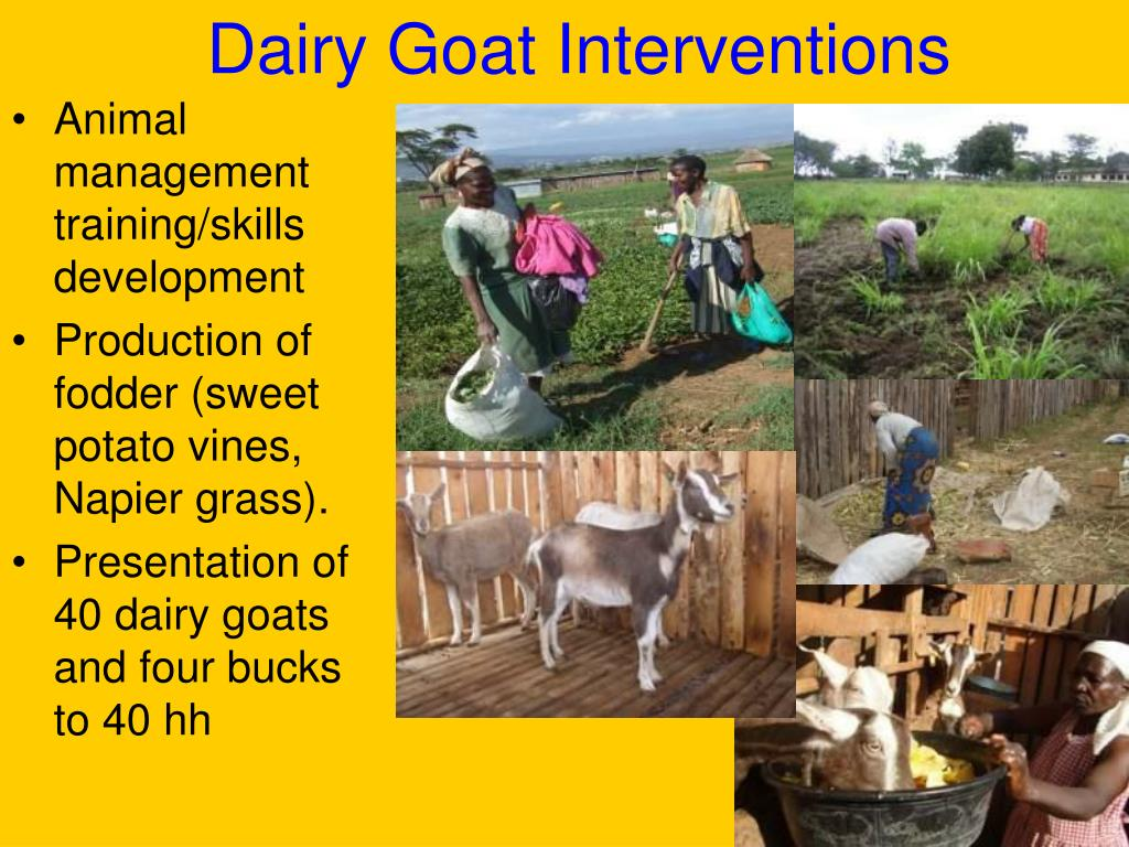 Dairy Goat Interventions