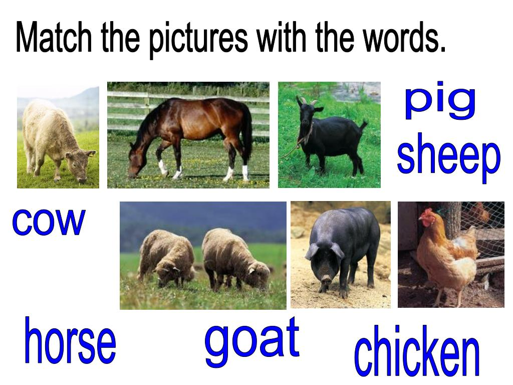 Match the pictures with the words.