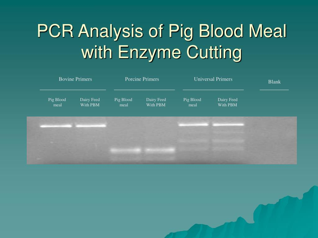 PCR Analysis of Pig Blood Meal with Enzyme Cutting