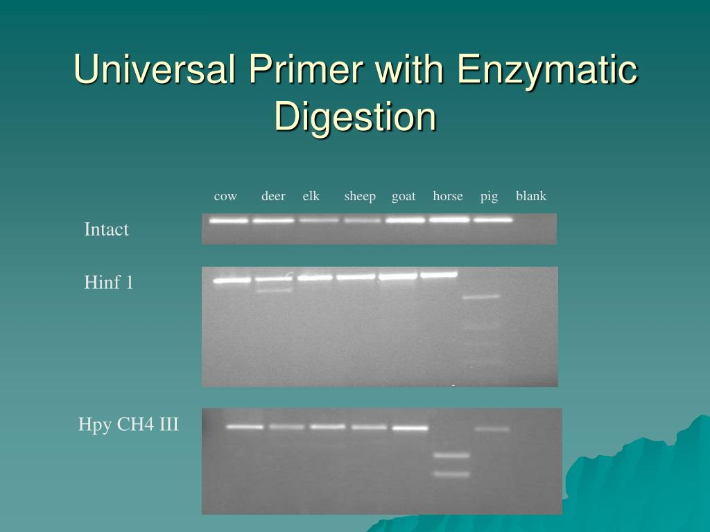 Universal Primer with Enzymatic Digestion