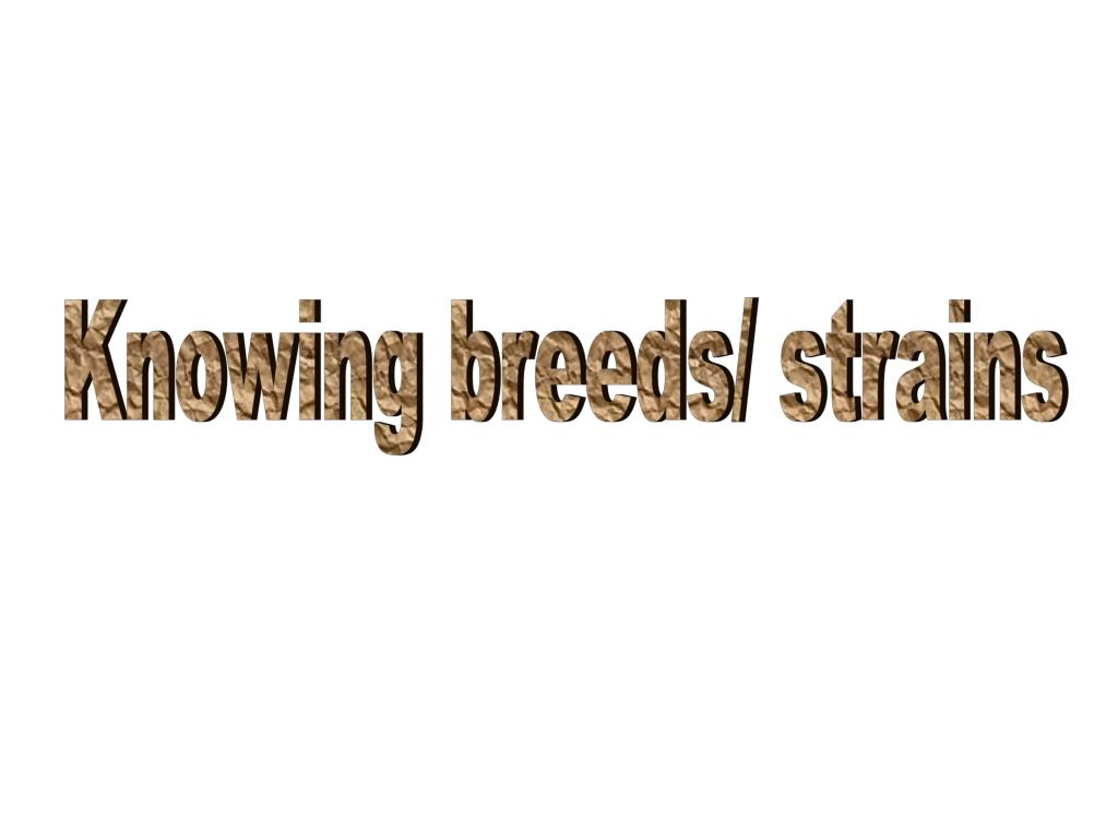 Knowing breeds/ strains