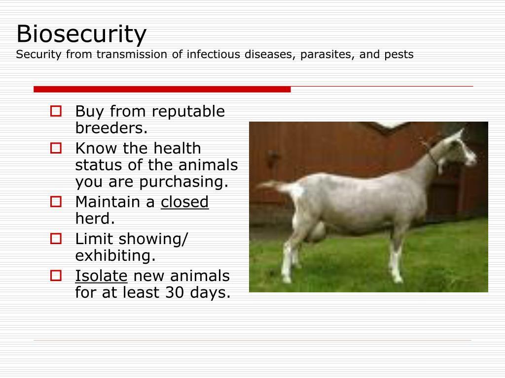Buy from reputable breeders.