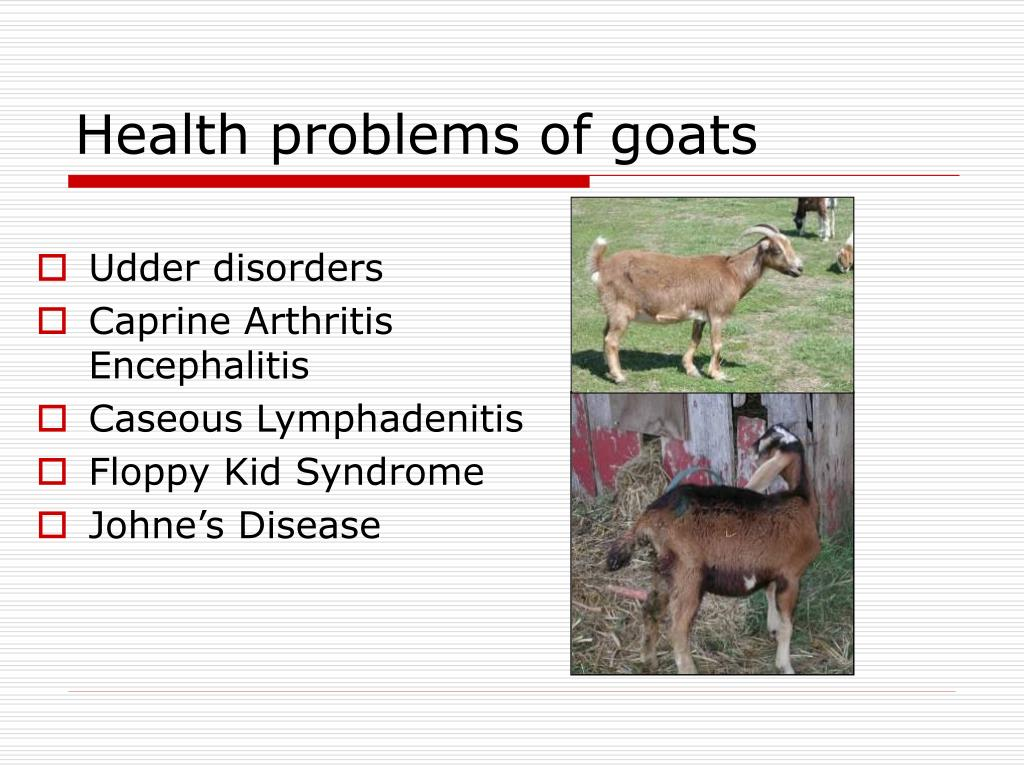 Udder disorders