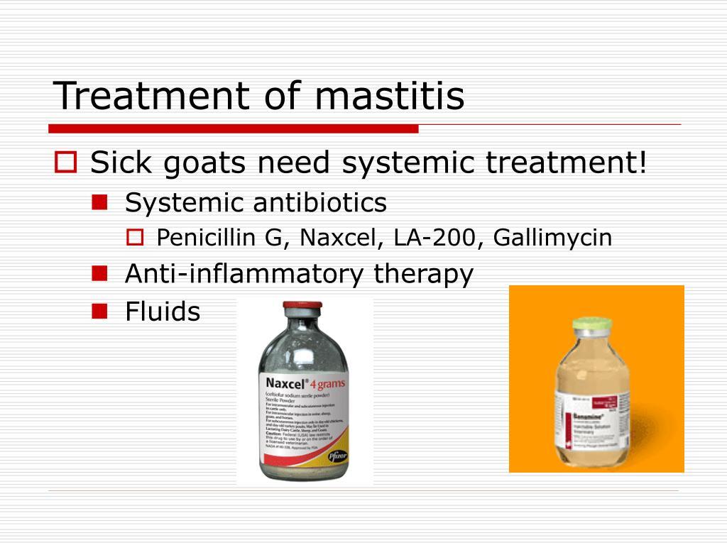Treatment of mastitis