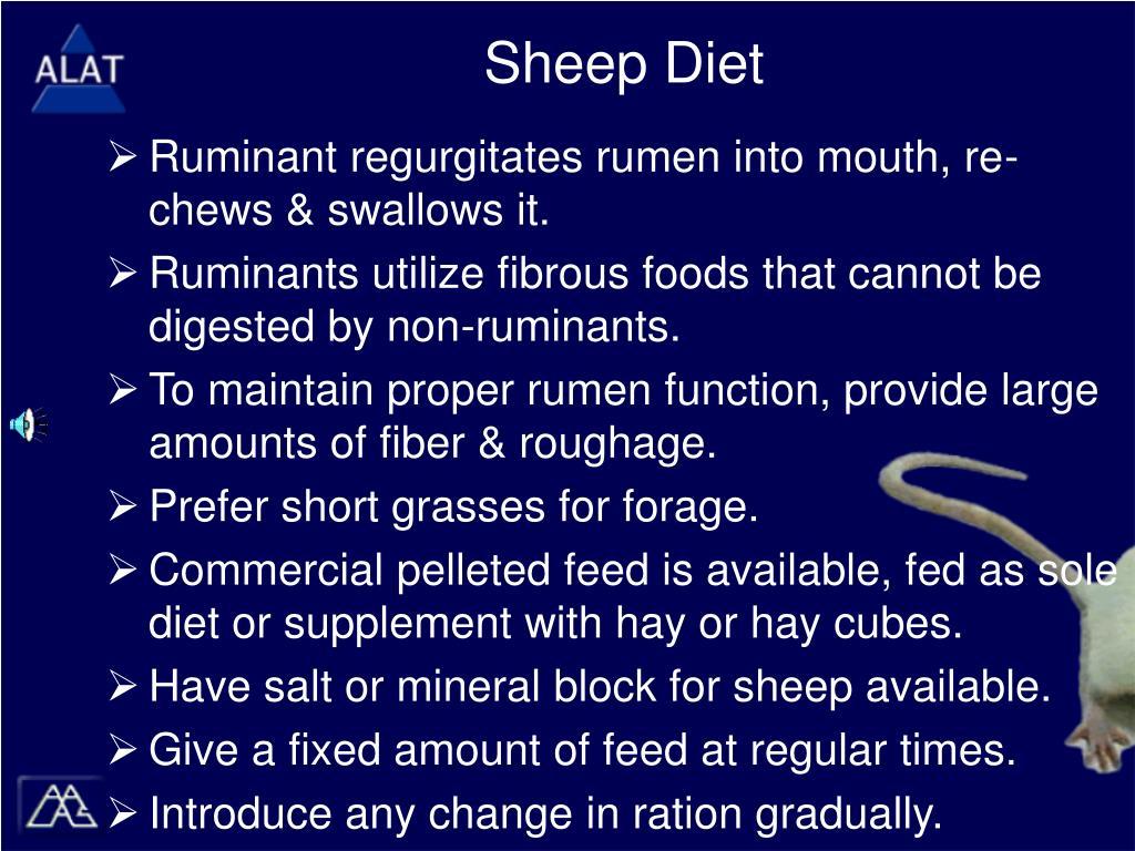 Sheep Diet