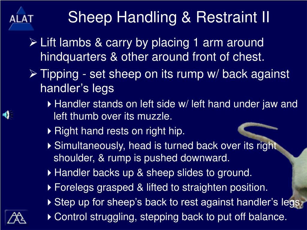 Sheep Handling & Restraint II