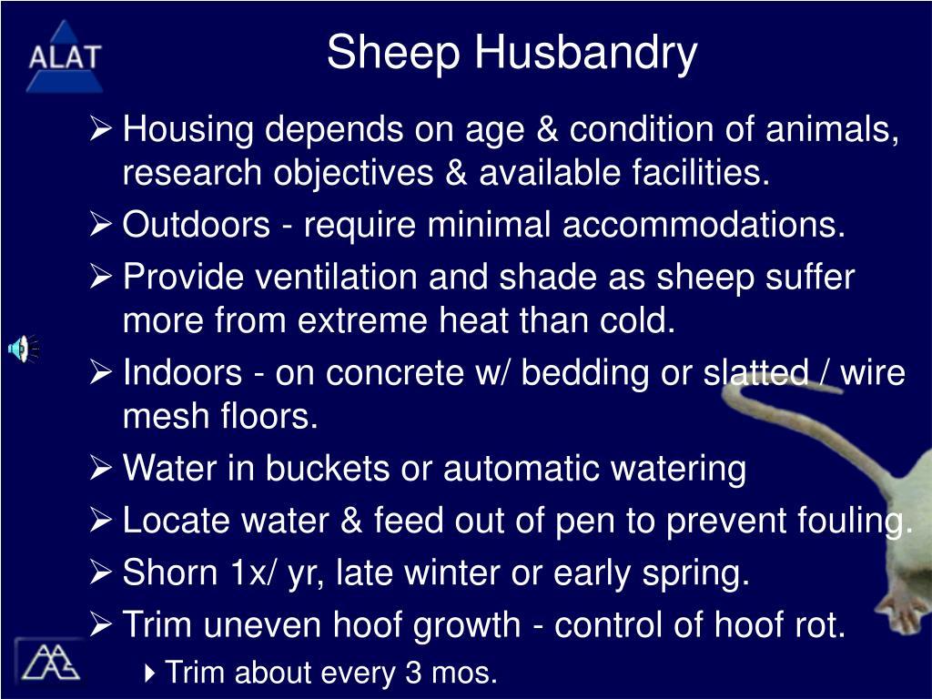Sheep Husbandry