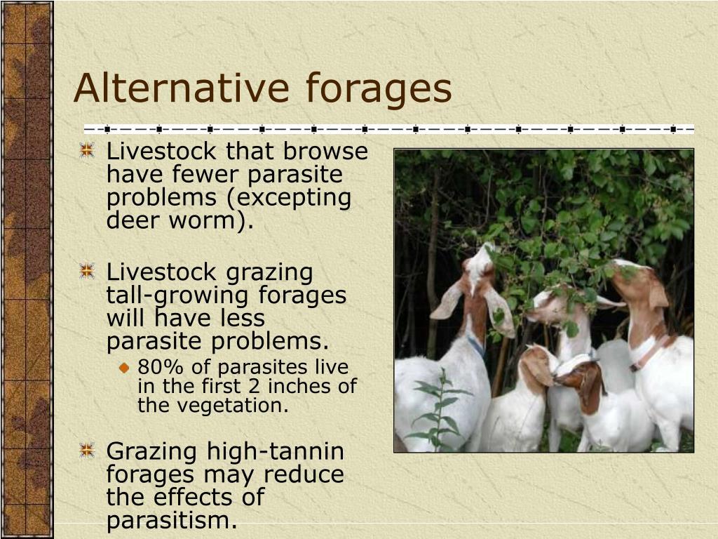 Alternative forages