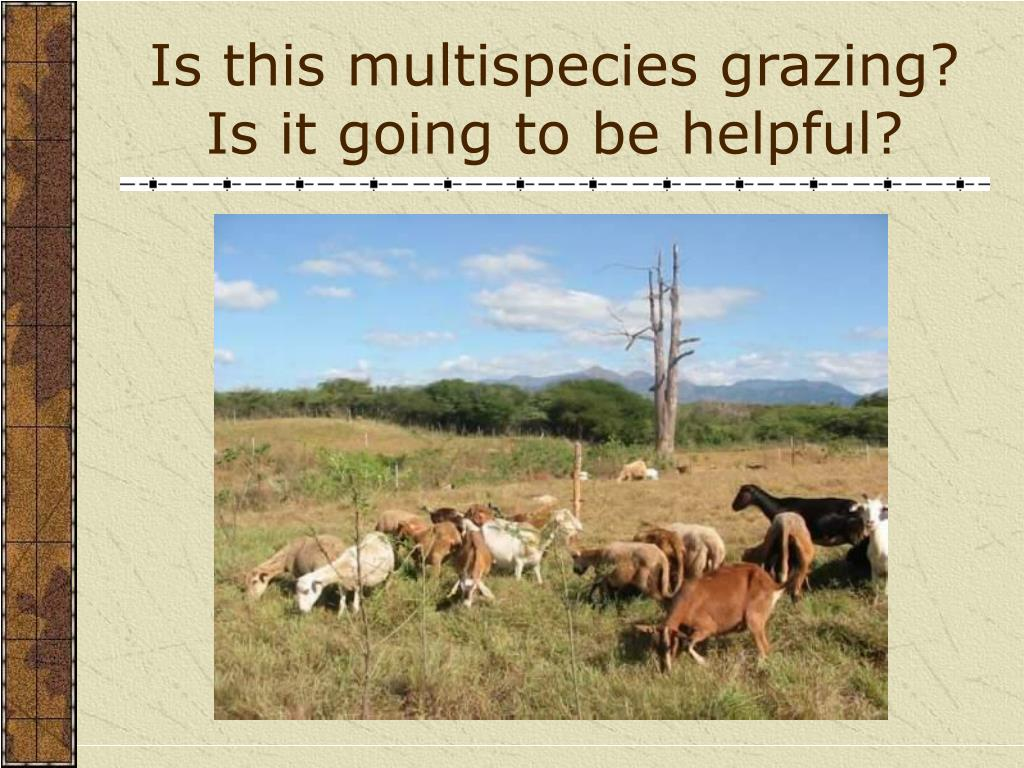 Is this multispecies grazing?