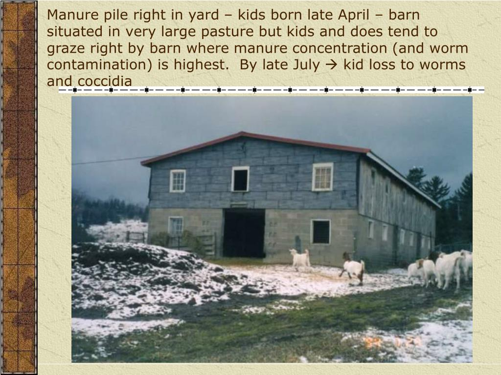 Manure pile right in yard – kids born late April – barn situated in very large pasture but kids and does tend to graze right by barn where manure concentration (and worm contamination) is highest.  By late July