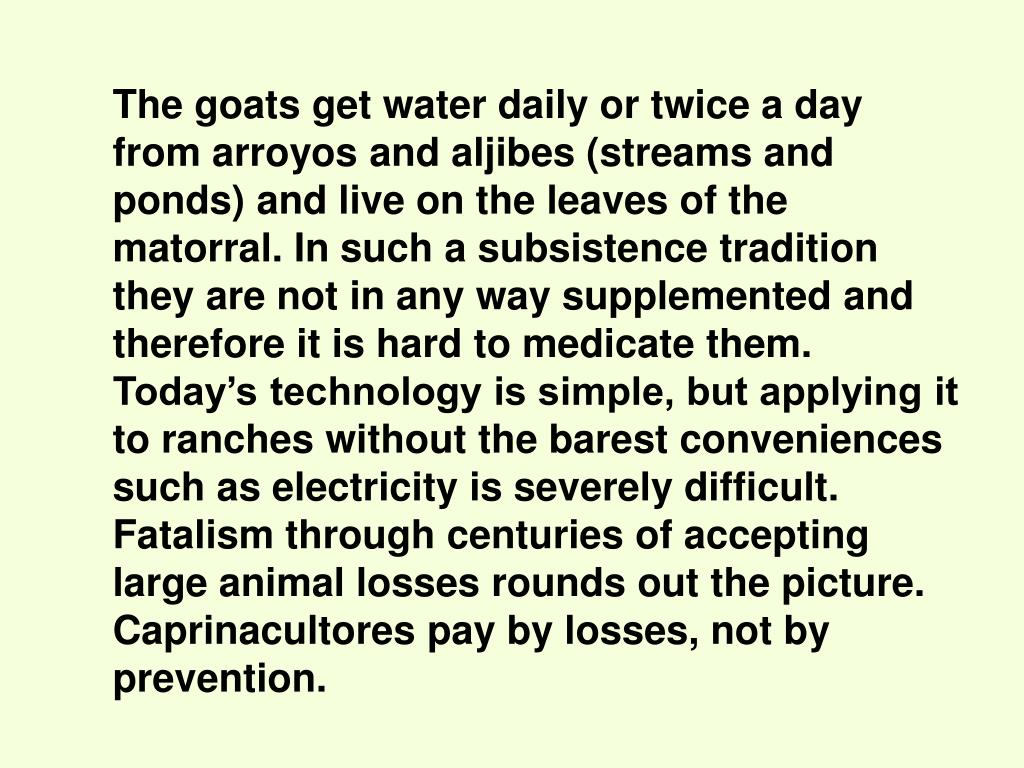 The goats get water daily or twice a day from arroyos and aljibes (streams and ponds) and live on the leaves of the matorral. In such a subsistence tradition they are not in any way supplemented and therefore it is hard to medicate them. Today's technology is simple, but applying it to ranches without the barest conveniences such as electricity is severely difficult. Fatalism through centuries of accepting large animal losses rounds out the picture. Caprinacultores pay by losses, not by prevention.