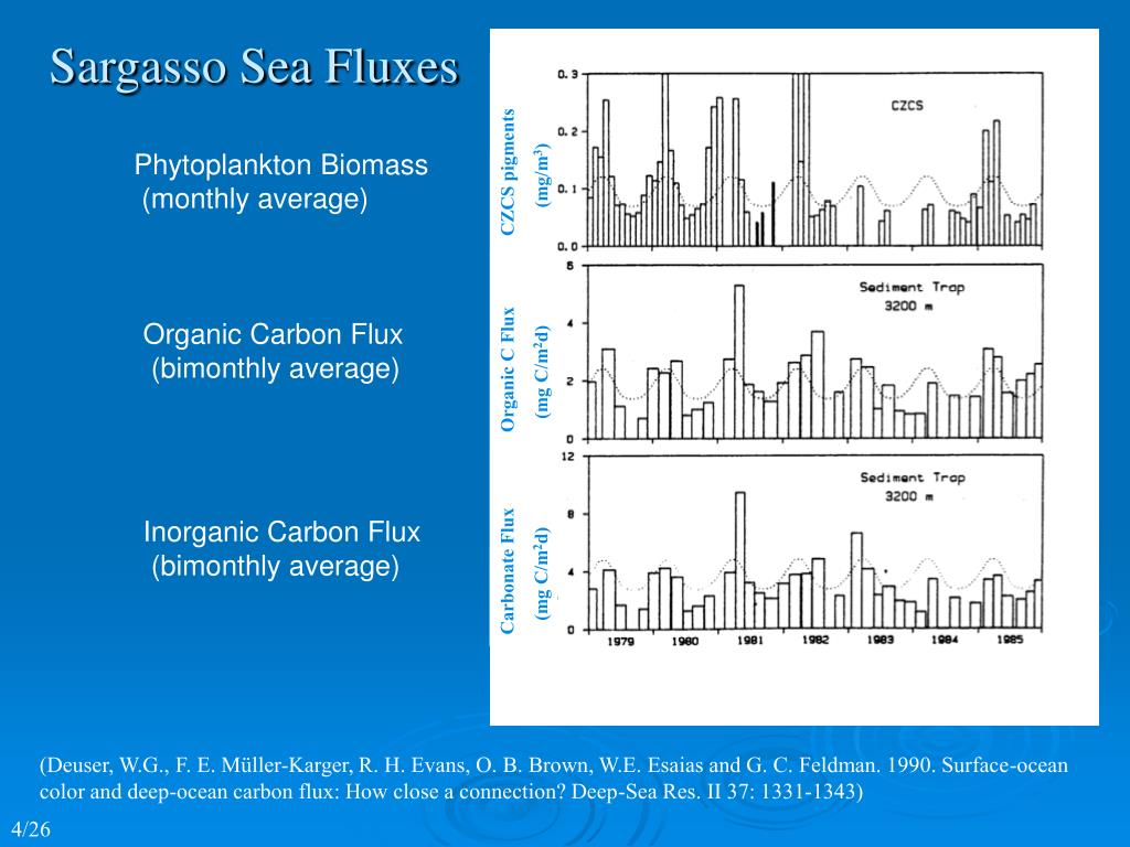 Sargasso Sea Fluxes